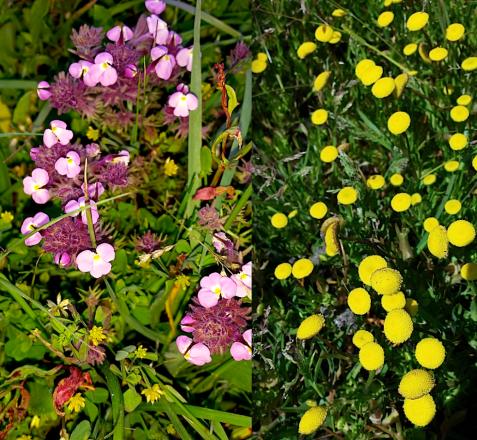 wp115 2 purple, yellow fleurs
