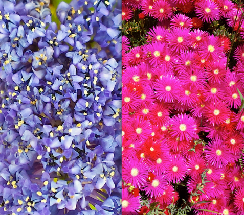 wp116 2 blue, purple flowers