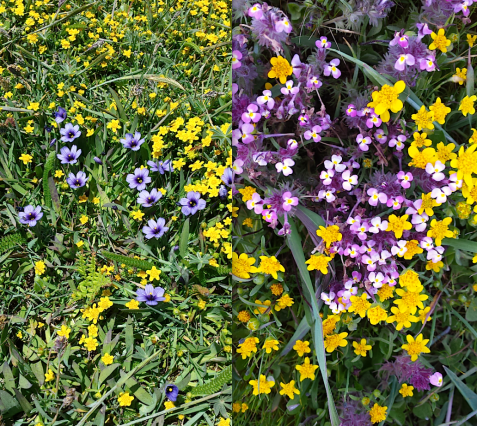 wp116 2 flowers in grass