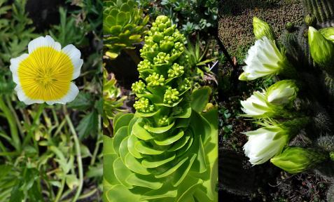 wp117 3 flowers yellow, green, white