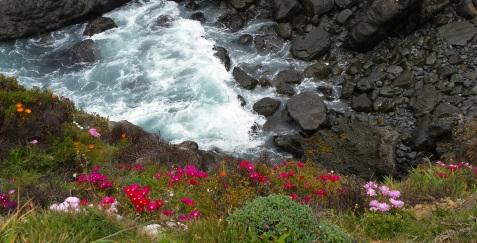 wp117 flowery shore