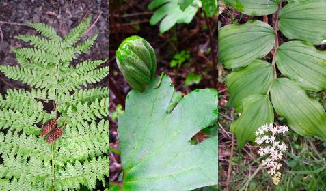 wp118 3 green fern etc