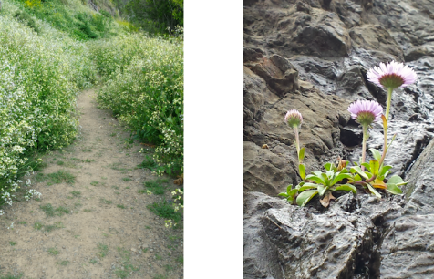 wp172 2 radish path, lavendar
