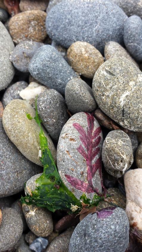 wp172 seaweed pasted