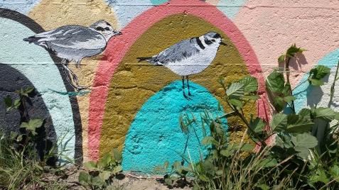 wp174 bird mural