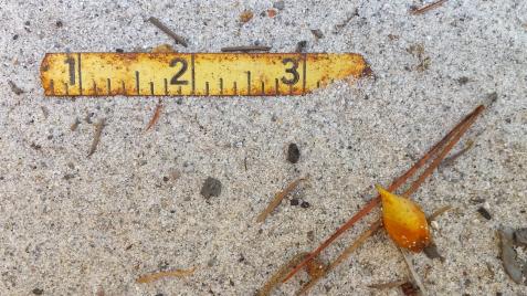 wp176 measuring tape, leaf