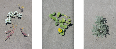 wp177 3 flora in sand
