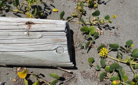 wp177 log, yellow flora