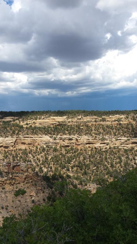 wp180 half stone forest, half sky