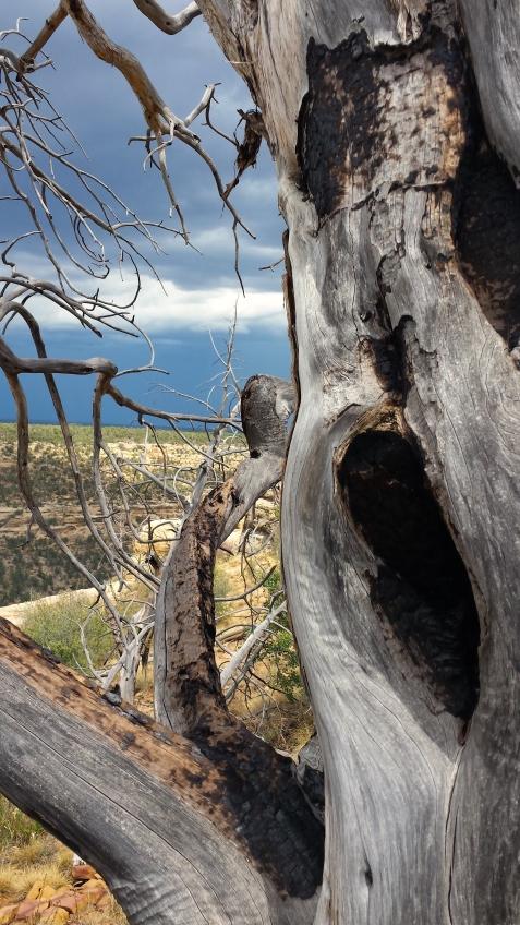 wp180 haunted tree