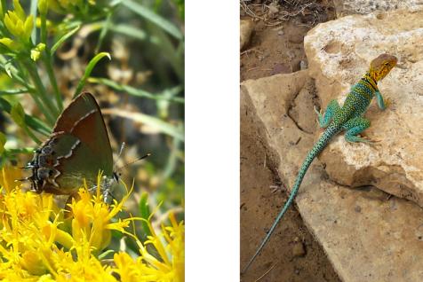 wp181 2 butterfly, lizard