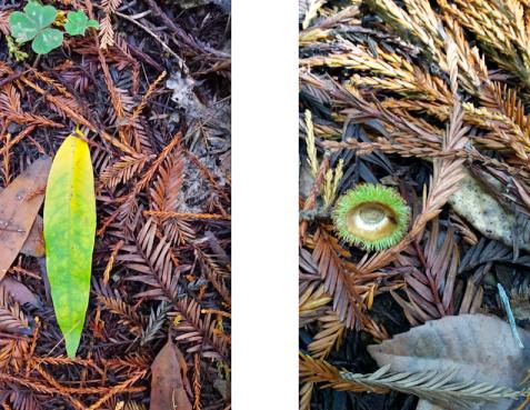 wp190 2 leaf, acorn top