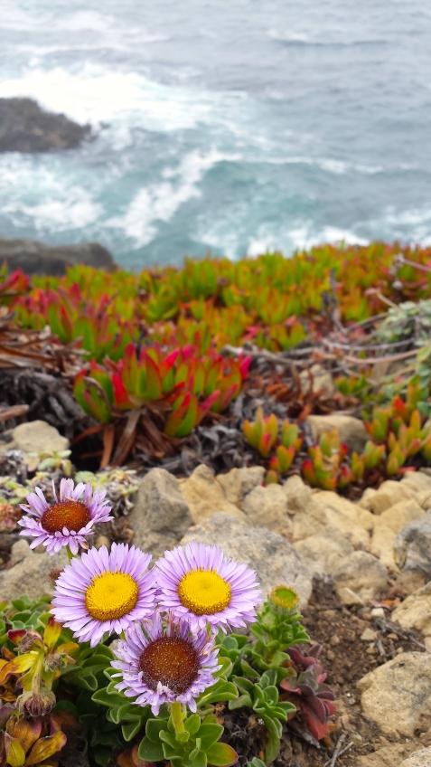 wp196 headland flowers