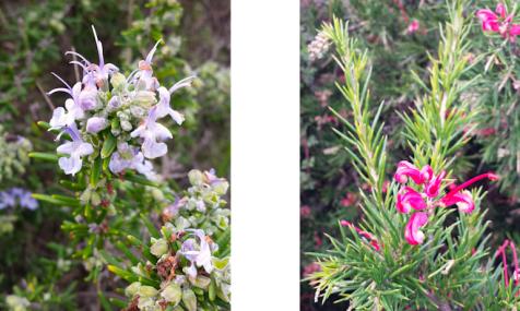 wp198 2 purple, pink flowers